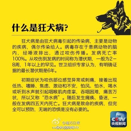 狂犬病死亡率100% 这些常识你必须知道