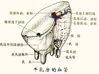 主动脉滤器经导管植入离体动物实验探究